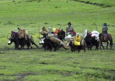 Tibetan nomads forcibly 'resettled' by China struggle with loss of an over 8,000-year-old heritage (Firstpost)